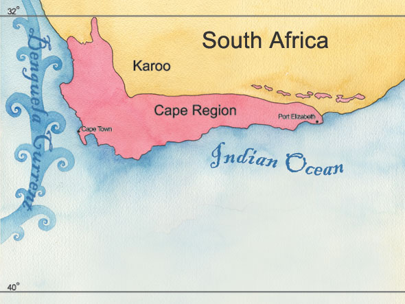 cape region south africa � landscape